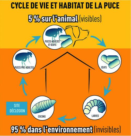cycle de développement de la puce