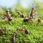 Traiter les fourmis et leur nid dans le jardin