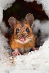 trou de souris