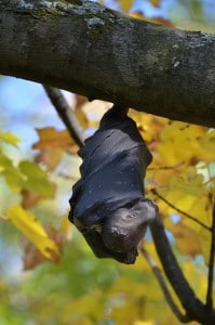 bat and tree