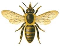 abeille vue de haut