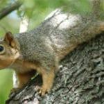 écureuil sur arbre