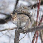 ecureuil sur branche