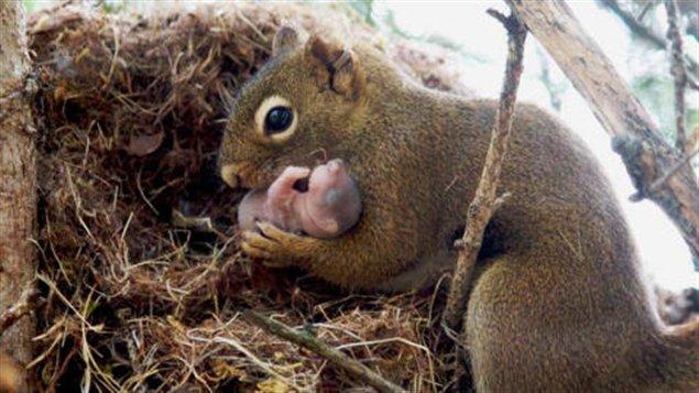 ecureuil et bébé