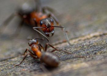 2 fourmis vue de proche